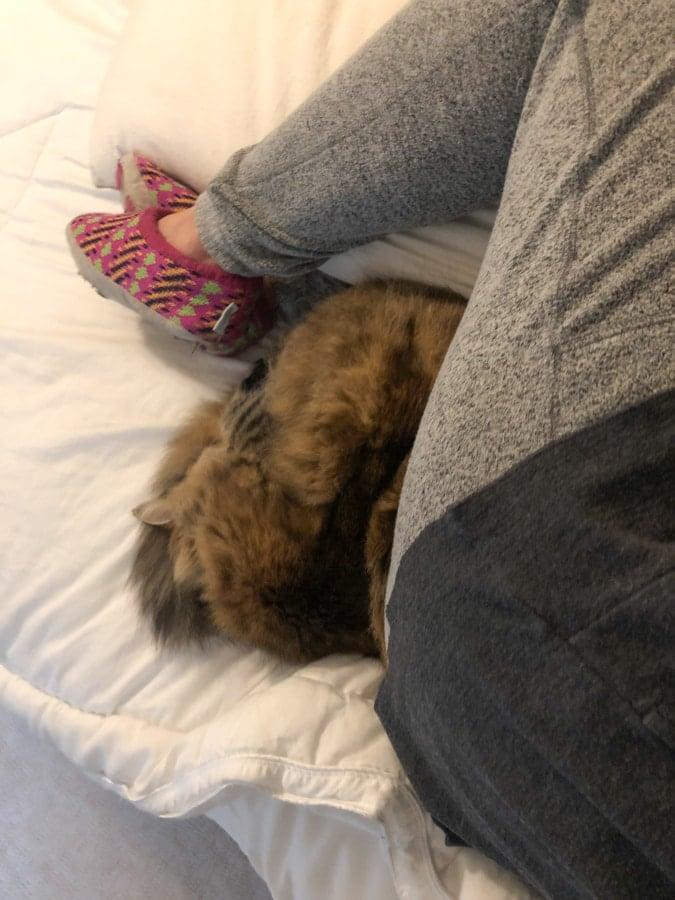 cat sleeping in leg nook