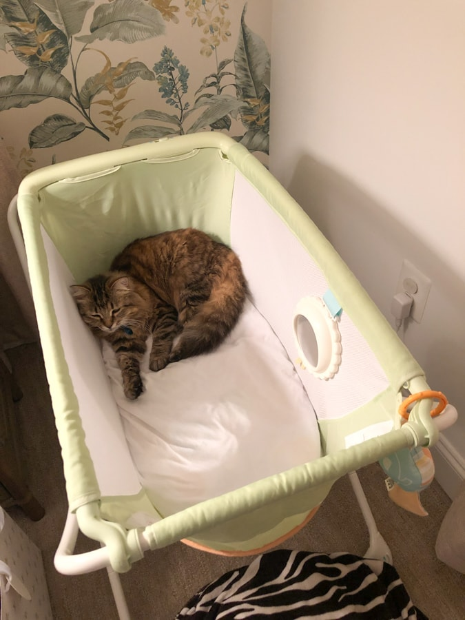 cat in a baby bassinet